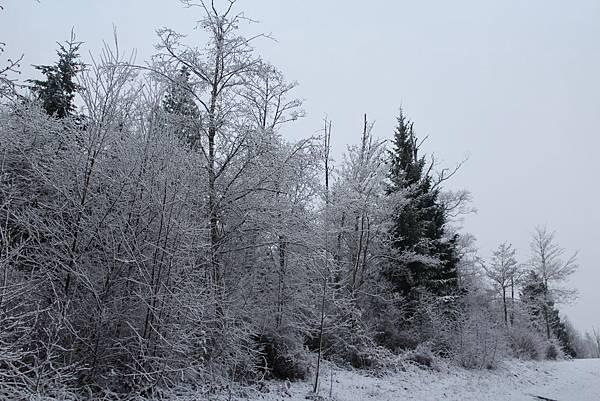 雪景2013 035