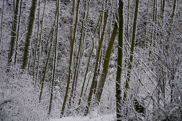 winter 2013 231