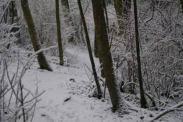 winter 2013 243