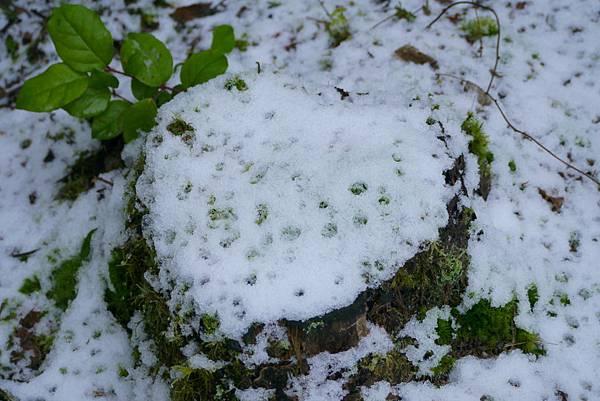 冬雪 111