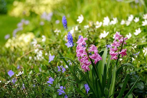 春天花園 036