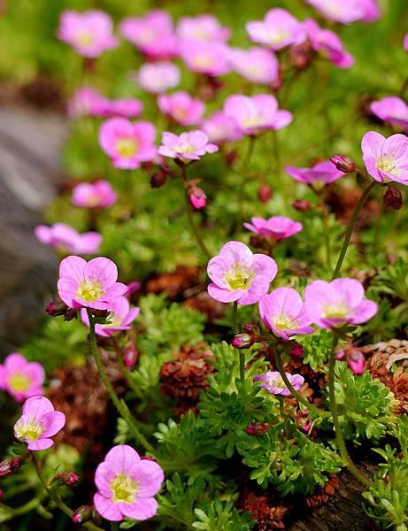 春天花園 040
