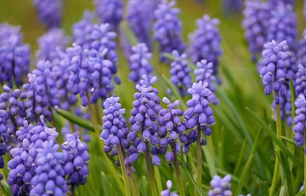 春天花園 101