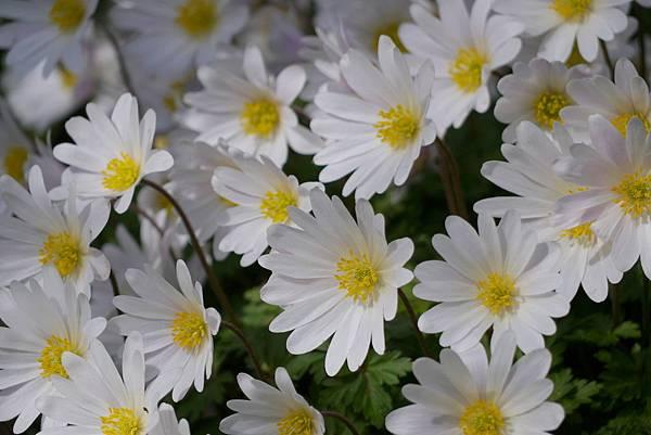 春天花園 028