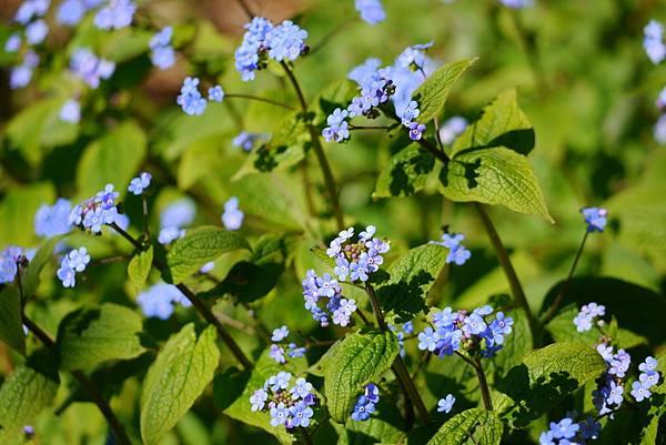 春天花園 076