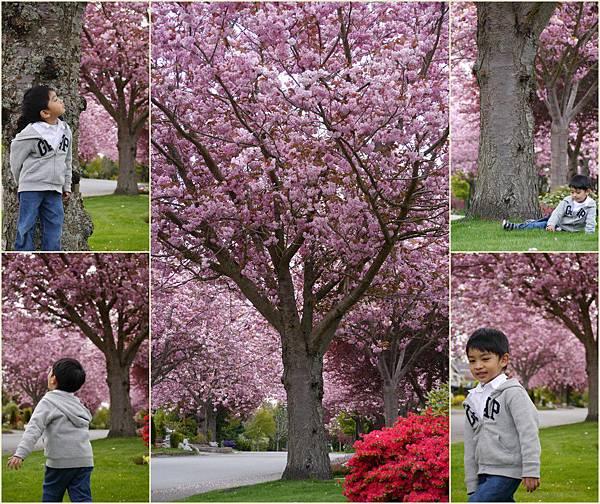 2013-04-26 春天與賞櫻