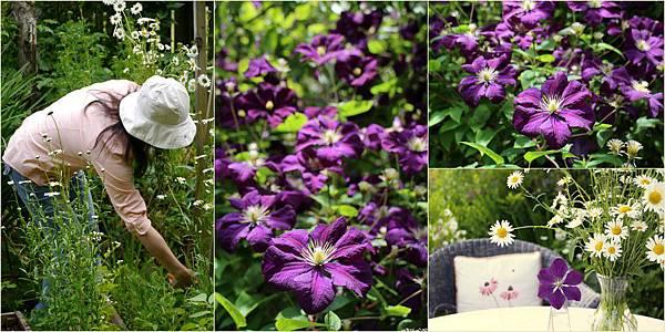 2013-07-15 藍莓開口派1