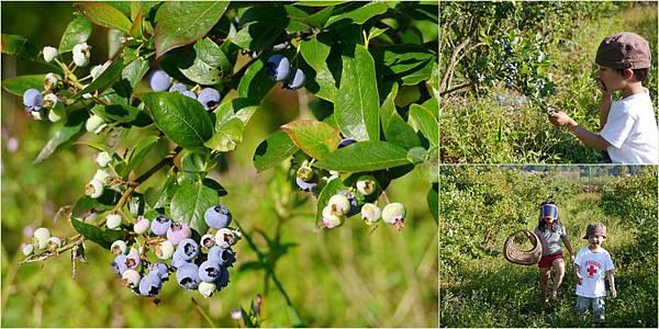 2013-07-15 藍莓開口派2