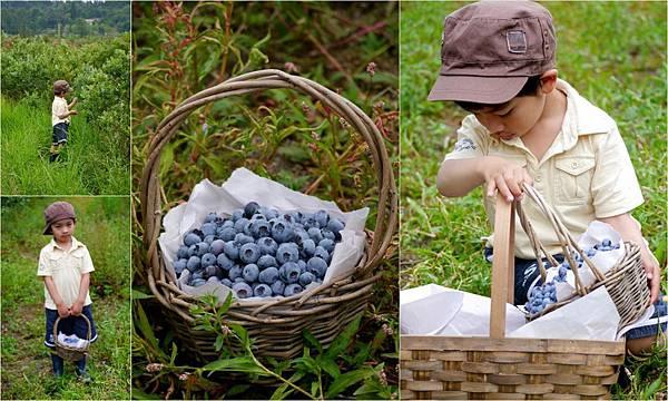 2013-07-16 採藍莓