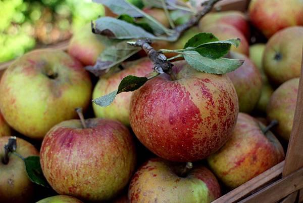 apples 049