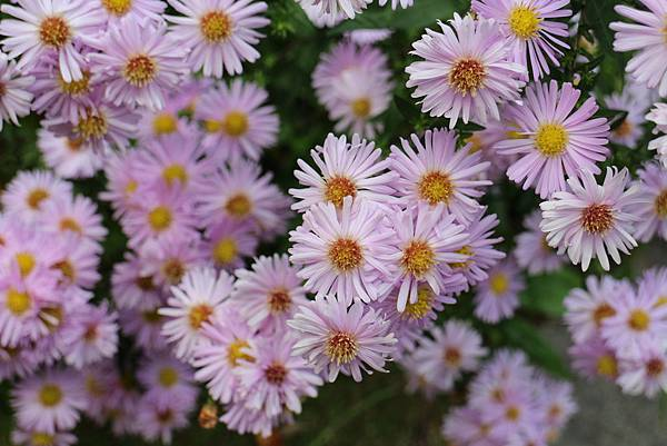 aster 011