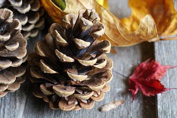 hazelnut cookies-pine cones 263