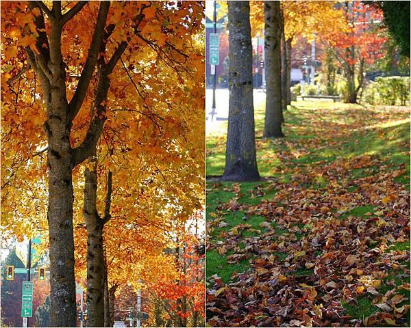 2013-11-01 fall 20132