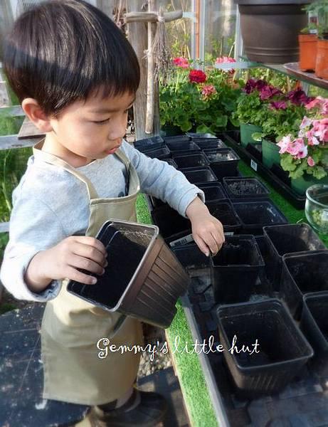 seedling 062.JPG
