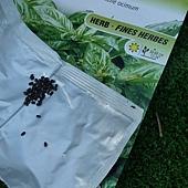 seedling 117.JPG