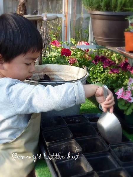 seedling 071.JPG