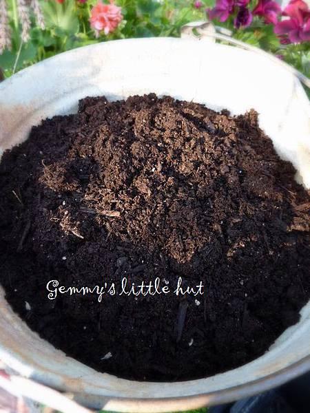 seedling 068.JPG