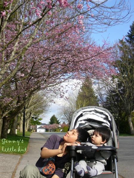 寶寶看櫻花.jpg
