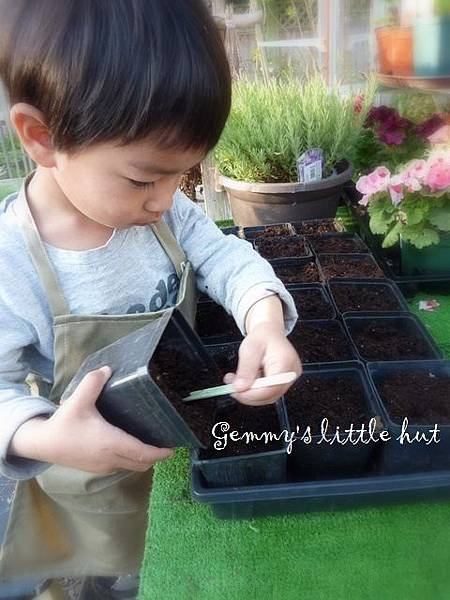 seedling 094.JPG