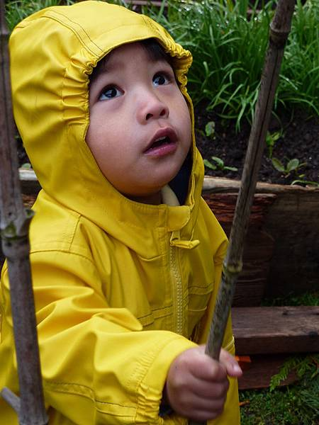 spring garden 2010 208.JPG