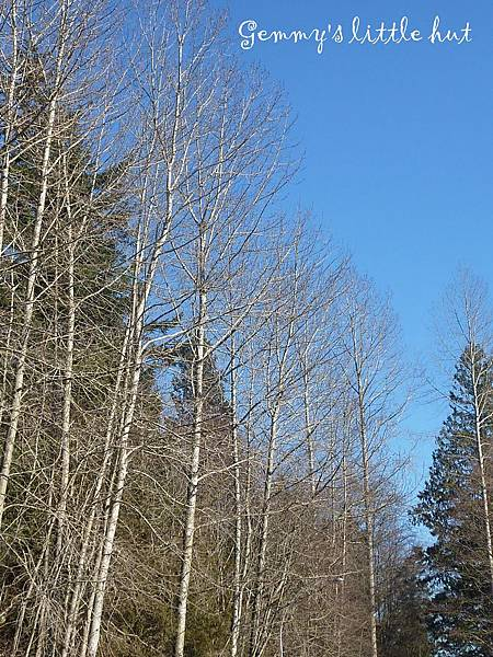 冬景1.jpg