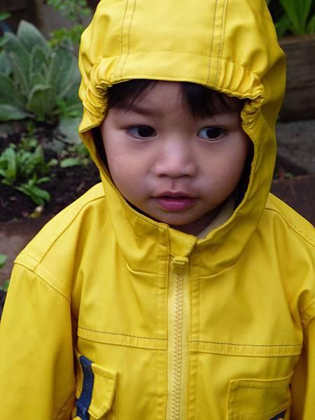 spring garden 2010 205.JPG