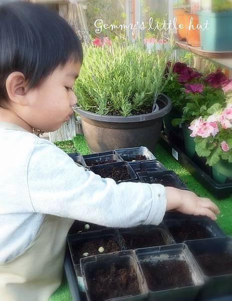 seedling 083.JPG