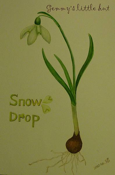 snow drop & crocus illustrations 001.JPG