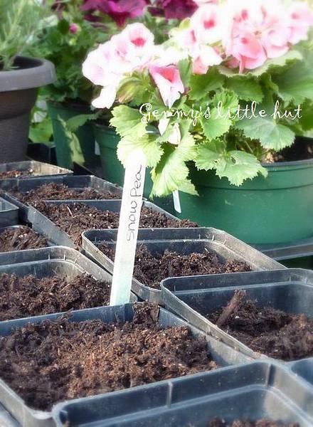 seedling 096.JPG