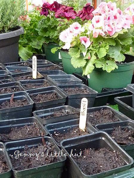 seedling 118.JPG