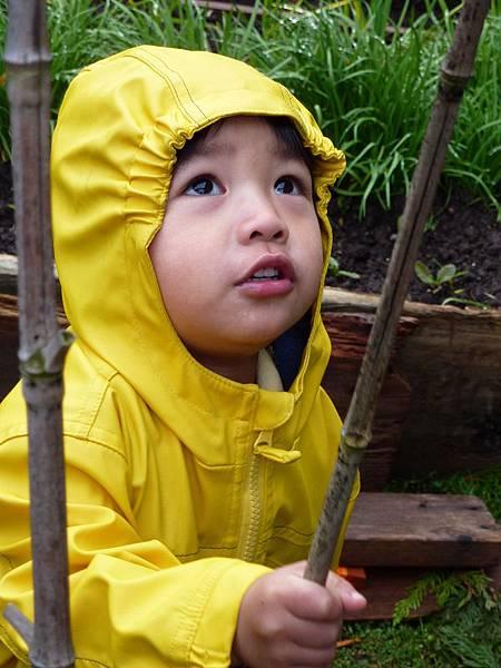 spring garden 2010 210.JPG