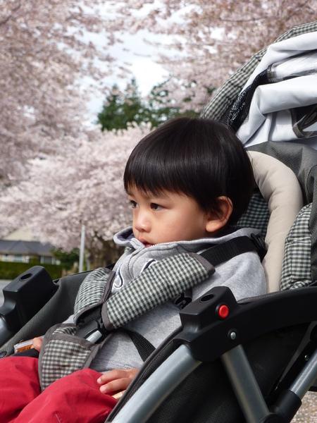 2010 March 24櫻花&寶寶.jpg