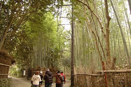 嵐山竹林.jpg