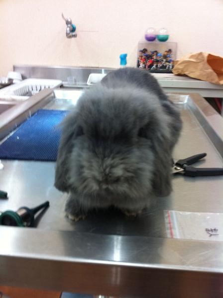 小春春兔兔