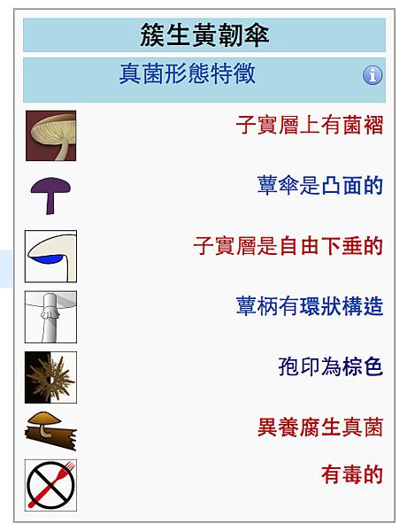 簇生黃靭傘
