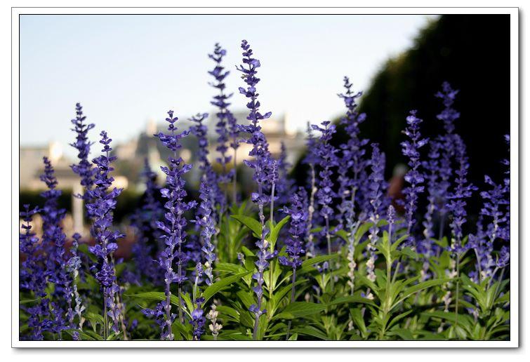 米拉貝爾花園3.jpg