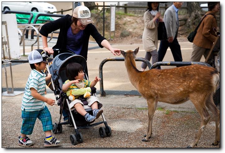 京阪神2010 C5D-185.jpg