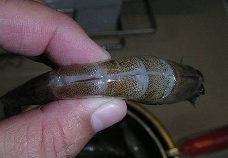 胡椒蝦02