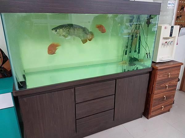 魚缸.jpg