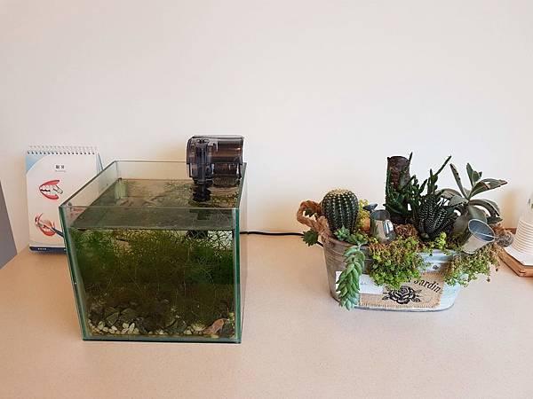 魚缸、花草植物.jpg
