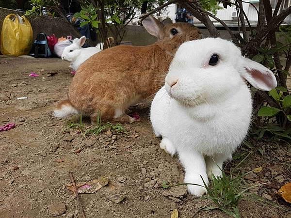 三兔對望.jpg