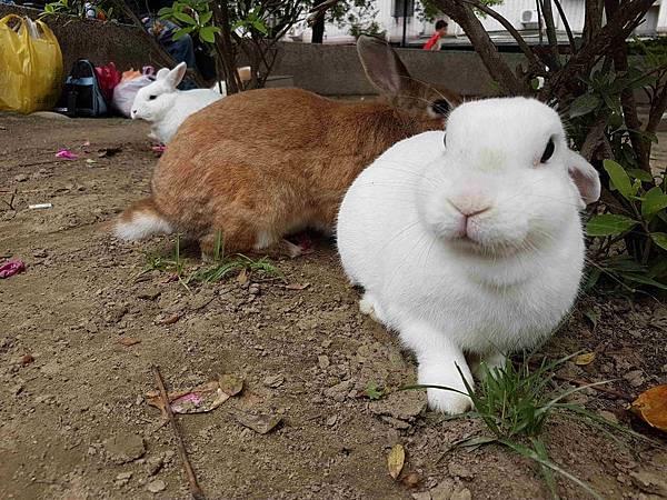 兔仔.jpg