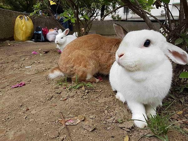 兔仔子.jpg