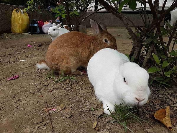 兔仔成群.jpg