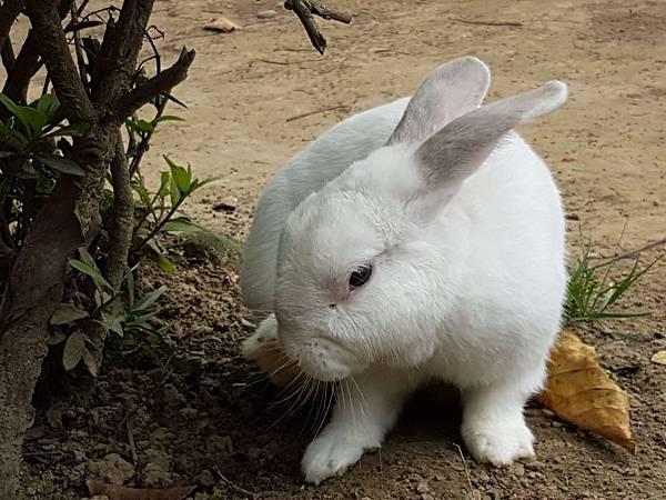 家兔.jpg