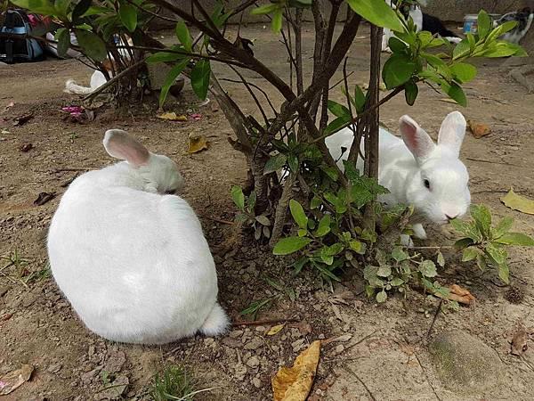 雙兔躲貓貓.jpg