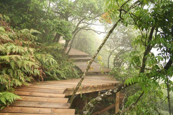 像入了熱帶雨林