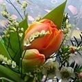 2006.11.18 買的漂亮鬱金香