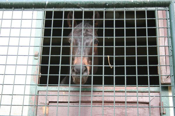 獄中的馬 XD