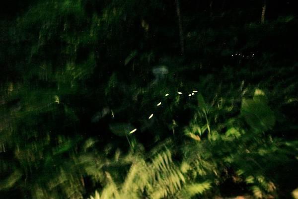 2015.5.2 三峽鳶尾山步道螢火蟲